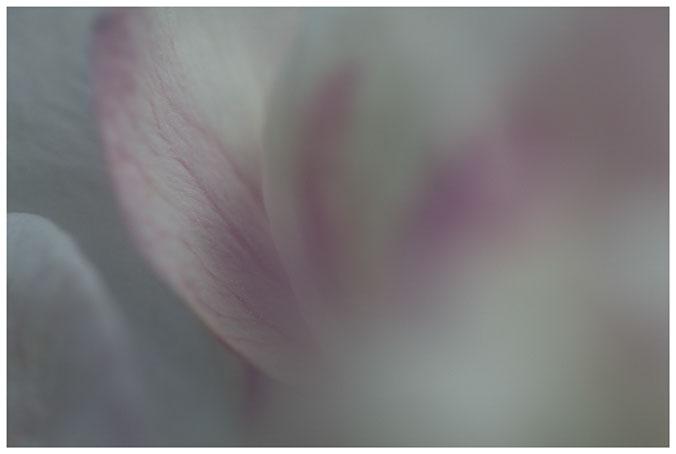 Apfelblüte 03